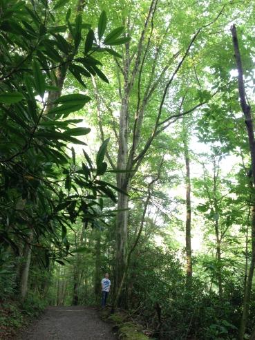 HUGE TREES!!