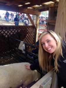 Petting the sheep before they were sheered