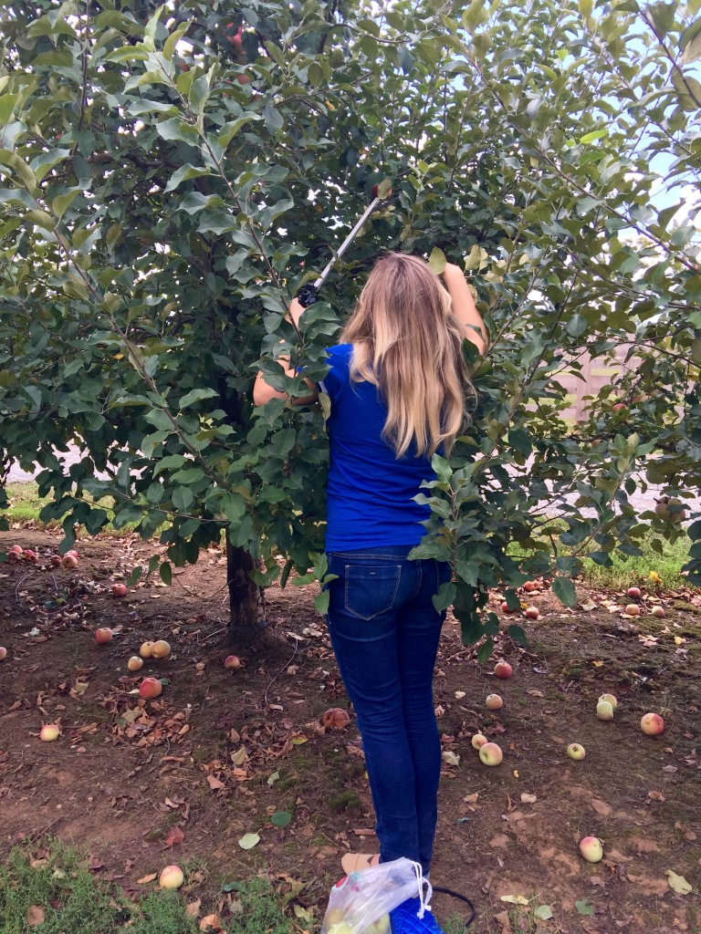 How short girls have to pick apples lol