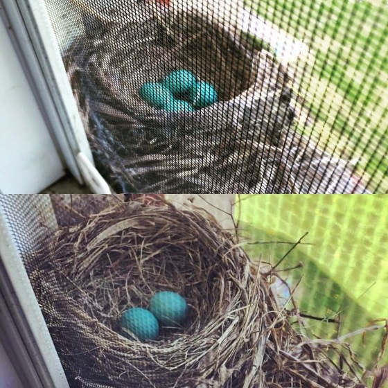 The Robins nest that we had last year and the one we had this year! Can't wait to show Annabelle this next year when she is able to understand a little more and to see her eyes light up with wonder at the life that is being created right in front of her. :)