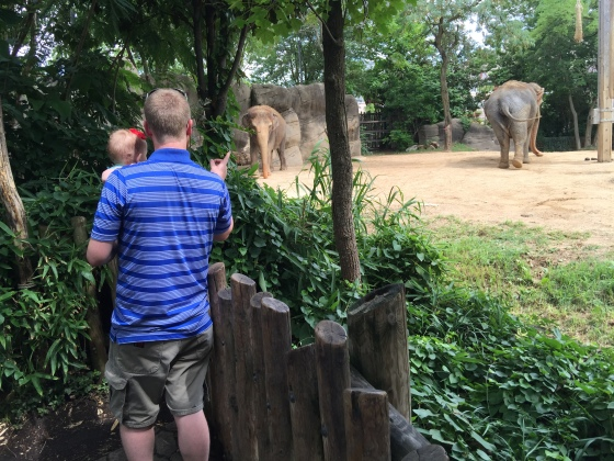 Showing/telling Annabelle about the elephants. He's such an attentive Dad!
